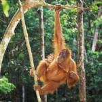 Jungle monkey and baby